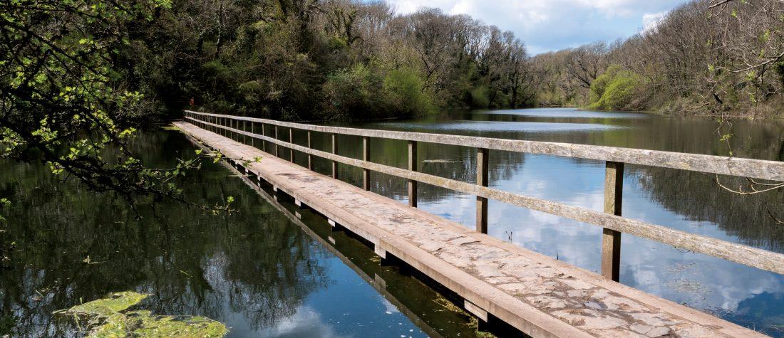 Bosherston Lily Ponds Bosherston Pembroke Pembrokeshire Wales